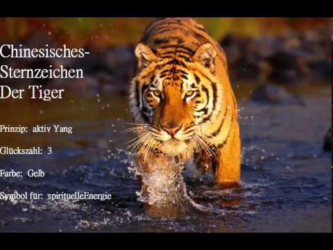 Eigenschaften Tiger