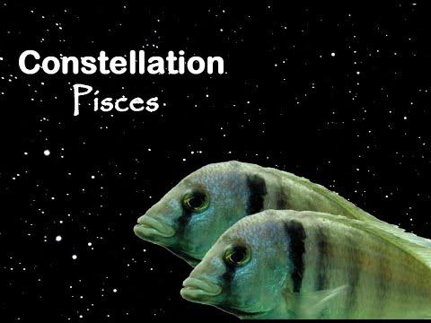 Constellation Pisces/Fish/Poissons