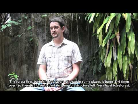 """""""Cari Hutan - In Search of Forest"""" - Part 3 - Deforestation in Indonesia"""