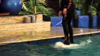 дельфины в смоленске котание