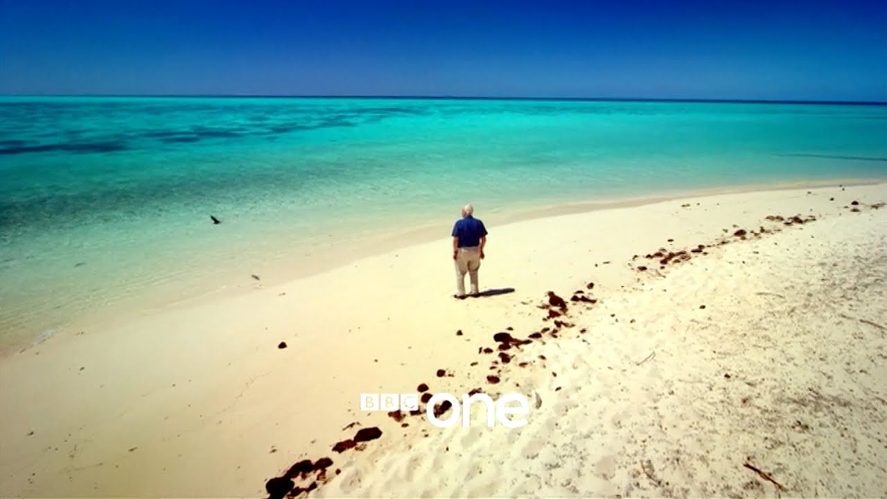 Great Barrier Reef with David Attenborough: Trailer - BBC One