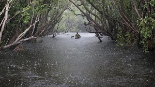 Rain and Thunder Sounds River Sounds Relaxing Sleep Meditation ASMR Rain Drops in water