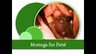 Moringa for pets, Breast feeding puppy