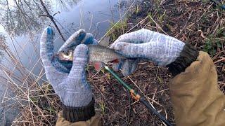 Рыбалка на поплавок весной 2020 Хороший клев плотвы Поймал язя или голавля