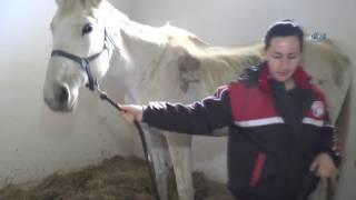 Bu Kadınlar Dokunmaya Korktukları Atların Seyisi Oldular iha ...