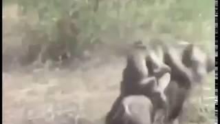 ОХ УЖ ЭТИ ЖИВОТНЫЕ))