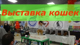 "Кошки и котята/Выставка кошек ""Love is ... мяу""  в Иркутске 10-11 февраля 2018 года"