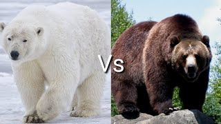 Белый медведь против Гризли! КТО ПОБЕЖДАЕТ?