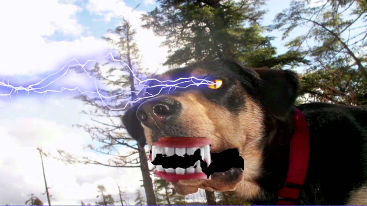 Zapped Again DOGZILLA vs. ALASKA - ...