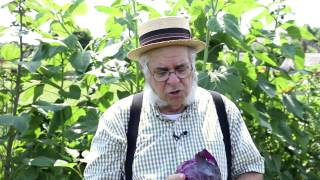 Gardening Tips and Tricks: How to Grow Cabbage
