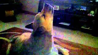 Junkyard dog sings the blues