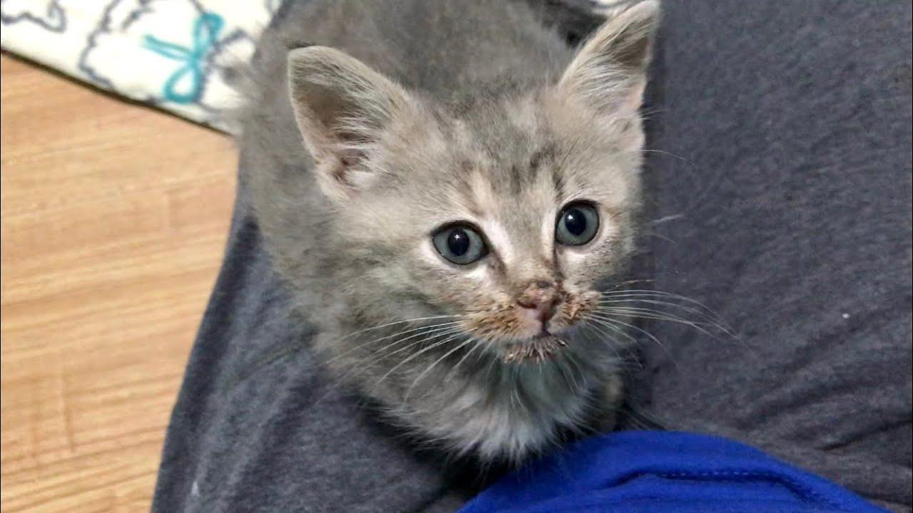 Littlest Kittens In The Big Nursery & Where I've Been