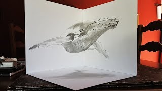 Drawing illusion 3D Anamorphique - Baleine