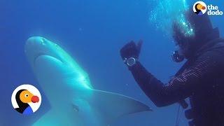 Shark Thanks Diver For Removing Nasty Hook | The Dodo