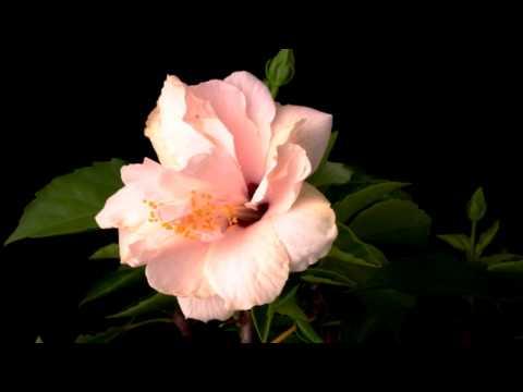 Многолетние цветы для -