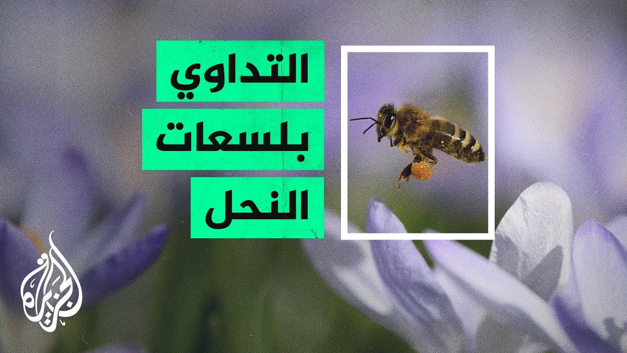 المداواة بلسع النحل.. جدل يتنامى حول مخاطر هذه الممارسة وفوائدها  - نشر قبل 2 ساعة