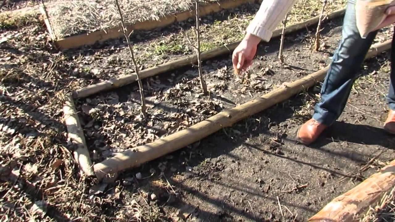 Газонные семена из белого клевера ползучего, широкий выбор газонных травосмесей в магазине rusgrass. Ru, звоните: 8 (800) 301-11-38 и +7 (495).