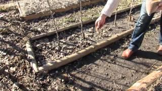Весна 2014. Посев семян клевера между делянками.