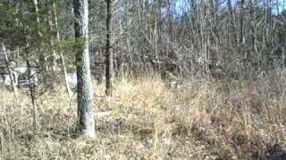 6804 Beech Creek Waynesboro, TN---26.7 Acres of Vacant Land--Owner Will Subdivide--Only $79,900