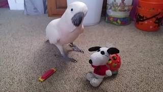 Snoopy Comes Out ~ Happy Thanksgiving