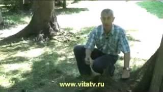 Иван Гамаз, Доктор Попов и др.