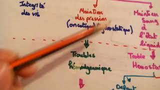 Pression hydrostatique/oncotique,homéostasie ds fluides/troubles hémodynamique, œdème [v.algérienne]