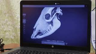 3D атлас для изучения анатомии коровы