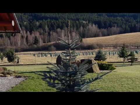 Stare Srni in Sumava National Park & big red Fox