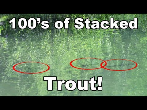 Electra Lake Stacked Trout - Shooting Fish In A Barrel - McFly Angler Episode 22