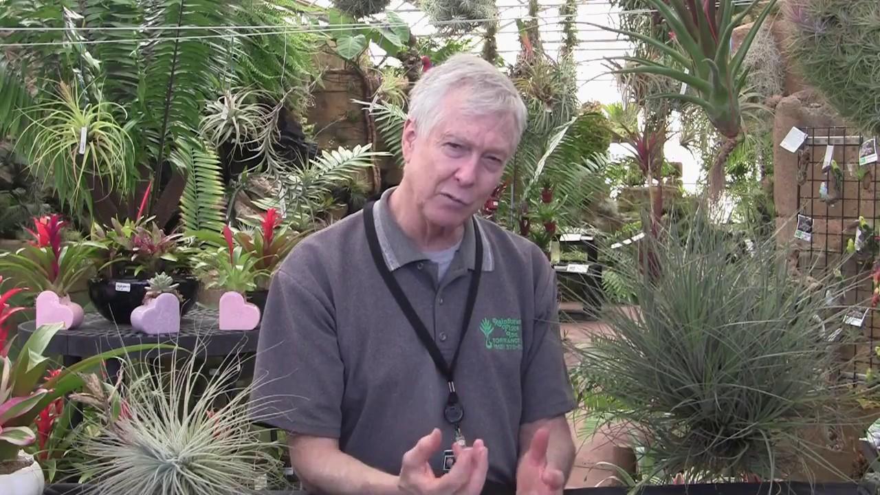 Paul Isley Rainforest Flora Ask Mr Tillandsia Episode 6