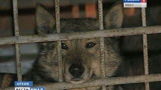 Отлов собак в Салехарде: куда пропали животные?
