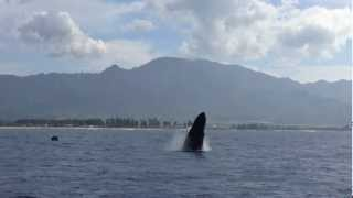 Adventure Tours Hawaii private tours watches whales with North Shore Catamaran Charters