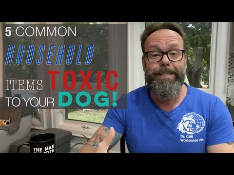 5 Household Products and Foods That Are Toxic to Your Dog