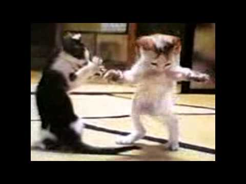 Kitty Cat Dance compilation - Very Funny Video of kitty cat Song