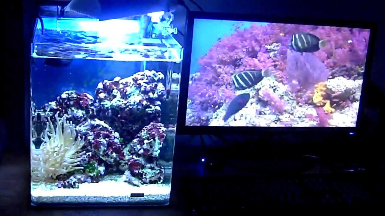 aquarium nano r cifal 30 litres 720 p hd youtube. Black Bedroom Furniture Sets. Home Design Ideas