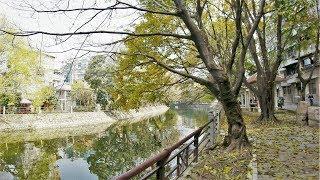 Haizhu Stream:Part1, Guangzhou /海珠涌:Part1, 廣州 [4K 60FPS] thumbnail