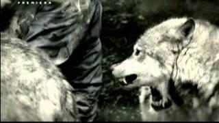 Człowiek wilk Discovery Channel