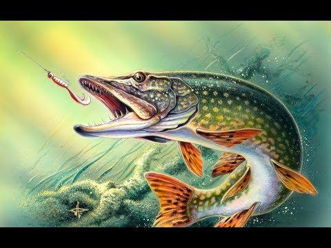 ✿Русская рыбалка 4✿ 《Обзор》