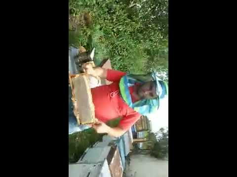 Qafqaz arısı 30.07.2017 zalqa