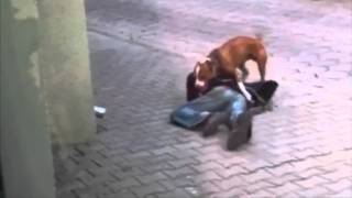 when drunk guy try to walk his dog