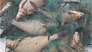 Зимняя рыбалка на реке Волга  Сеть зимой,  лещ winter fishing big bream