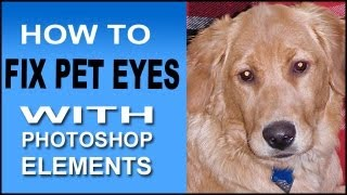 How To Fix Pet Eyes With Photoshop Elements