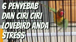 6 penyebab dan ciri ciri lovebird anda stres