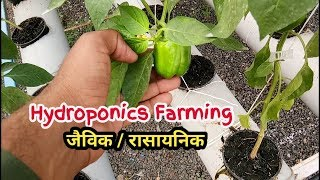 हाइड्रोपोनिक्स तकनीक से खेती जैविक या रासायनिक | Hydroponics Farming | बिना मिट्टी के खेती
