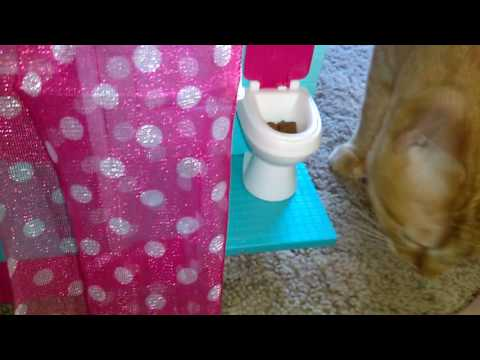 Lps Sunday Skits ı Episode 2ı Magical Cat Poop Fairy.