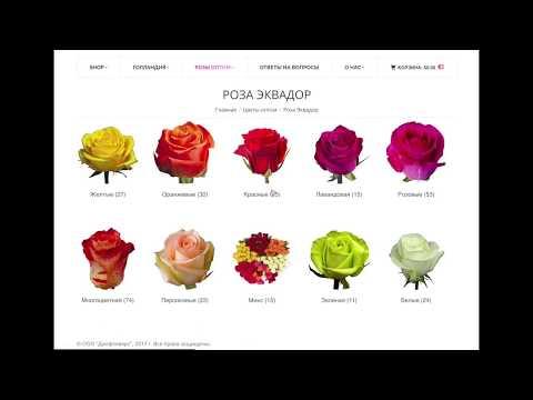 🌹Как закупать цветы оптом с аукционов Голландии и плантаций Эквадора