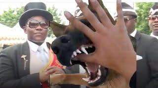 Cat vs Dog Coffin Dance Meme