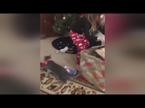 Kitten Jumps Out Of Gift Box Before Confused Little Girl Sees It