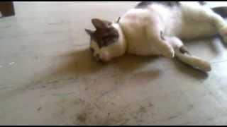 Effects of Catnip lol