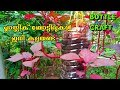 - Best Method To Grow Spinach Plant in Plastic Hanging Bottle ll Vertical Gardening ll No Space Garden